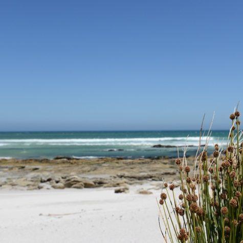 Scarborough beach 06