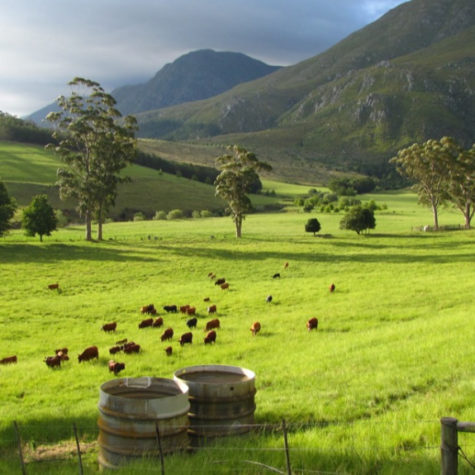 Eenuurkop Farm 01