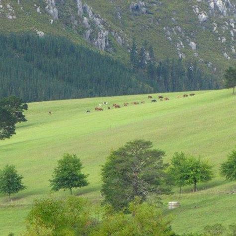 Eenuurkop Farm 05