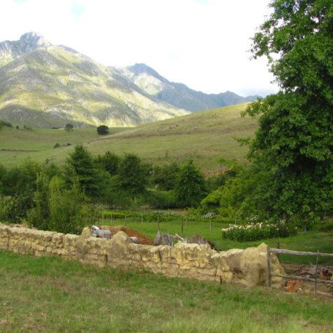 Eenuurkop Farm 06