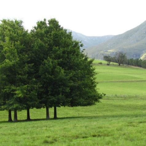 Eenuurkop Farm 08