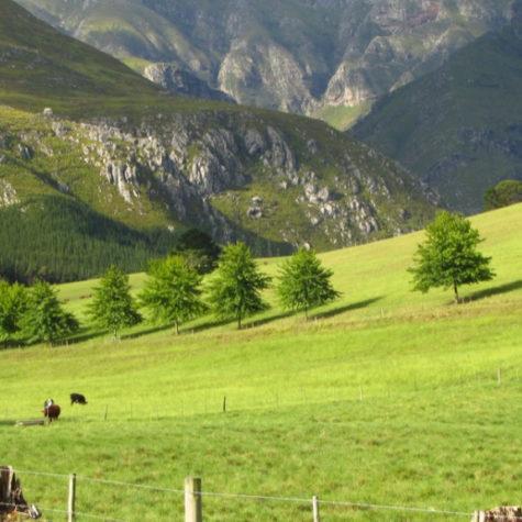 Eenuurkop Farm 10