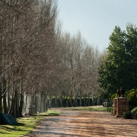 Waterfort Farm_Stellenbosch 08